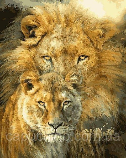 Картина за номерами Лев і левиця, 40x50 див., Babylon