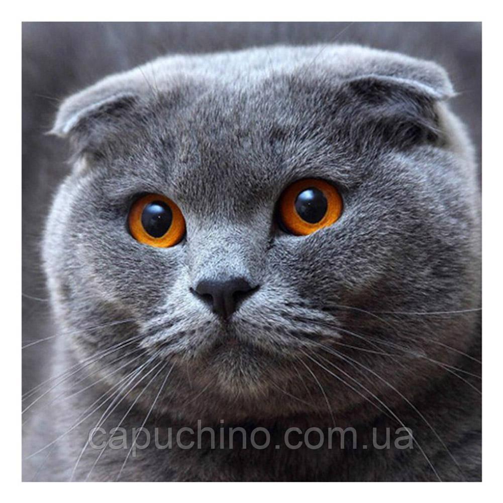 Алмазная мозаика DIY Веслоухий кот 20х20см. Коты. Животные, 16 цветов, квадратные стразы