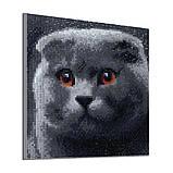 Алмазная мозаика DIY Веслоухий кот 20х20см. Коты. Животные, 16 цветов, квадратные стразы, фото 5