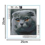 Алмазная мозаика DIY Веслоухий кот 20х20см. Коты. Животные, 16 цветов, квадратные стразы, фото 10