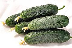 Афсар F1 насіння огірка, 1000 насіння — партенокарпічний, темно-зелений, 35-40 днів, Nong Woo Bio