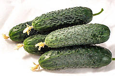 Афсар F1 насіння огірка, 500 насінин — партенокарпічний, темно-зелений, 35-40 днів, Nong Woo Bio