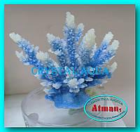Актинии SH 059-2, коралл