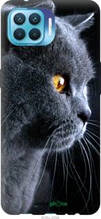 """Чехол на Oppo Reno 4 Lite Красивый кот """"3038u-2099-2448"""""""