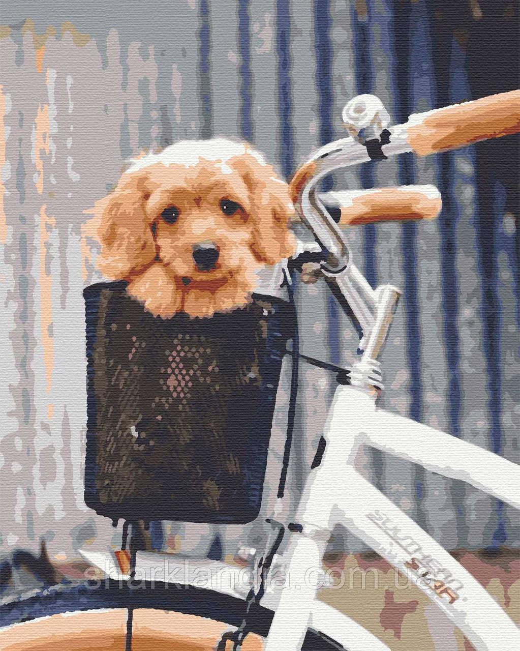 Картина по номерам Путешествие 40*50см Riviera Blanca Раскраски Пес в велосипеде Авто Прикольные