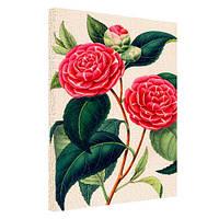 Принт на холсте Розовая мальва