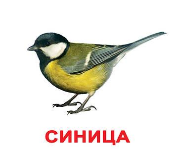 Птахи. Картки Домана. Вундеркінд з пелюшок