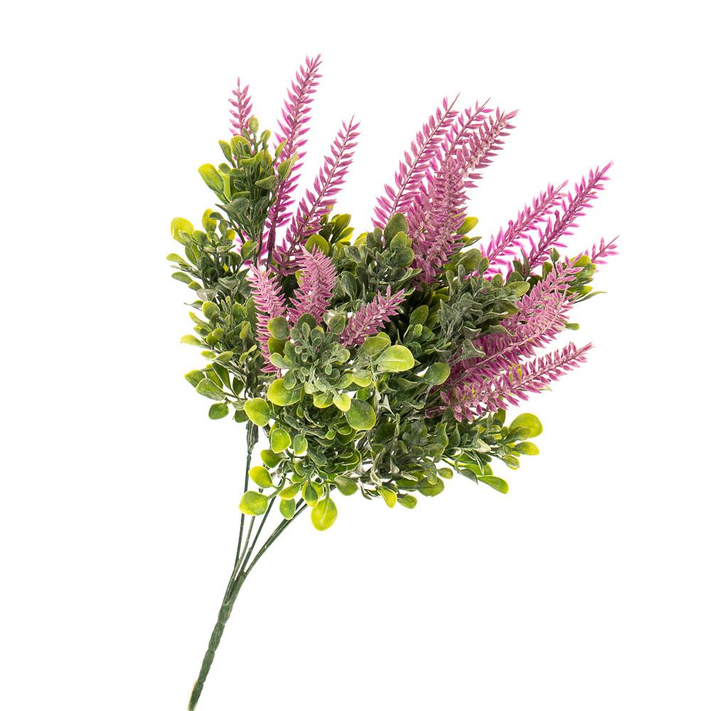 Цветок Шалфей розовый