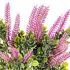 Цветок Шалфей розовый, фото 2