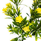 Квітка Олеандр жовтий, фото 2