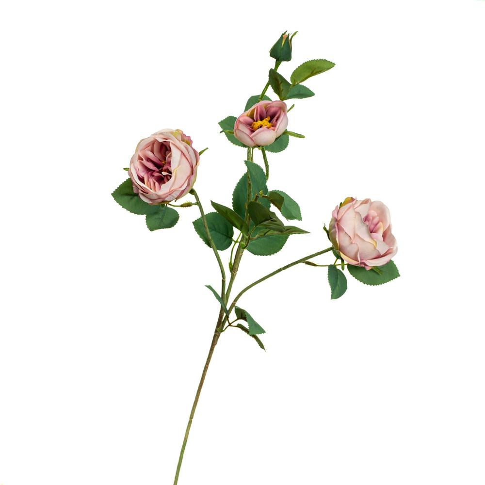Ветка розы, пудровая