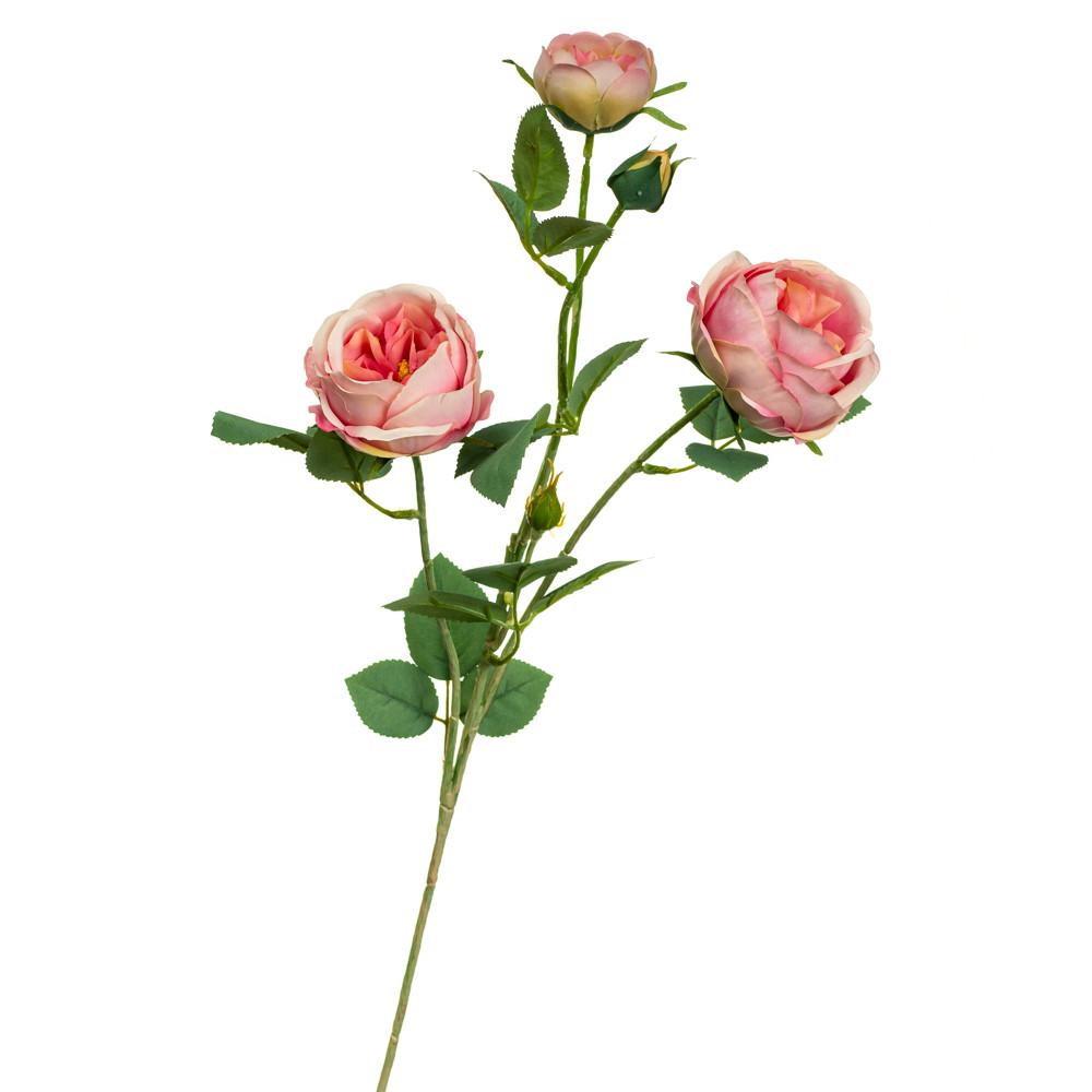 Гілка троянди, рожева