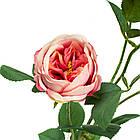 Гілка троянди, рожева, фото 2