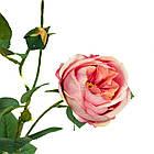 Гілка троянди, рожева, фото 3