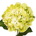 """Штучний квітка """"Гортензія лимонна"""", фото 2"""