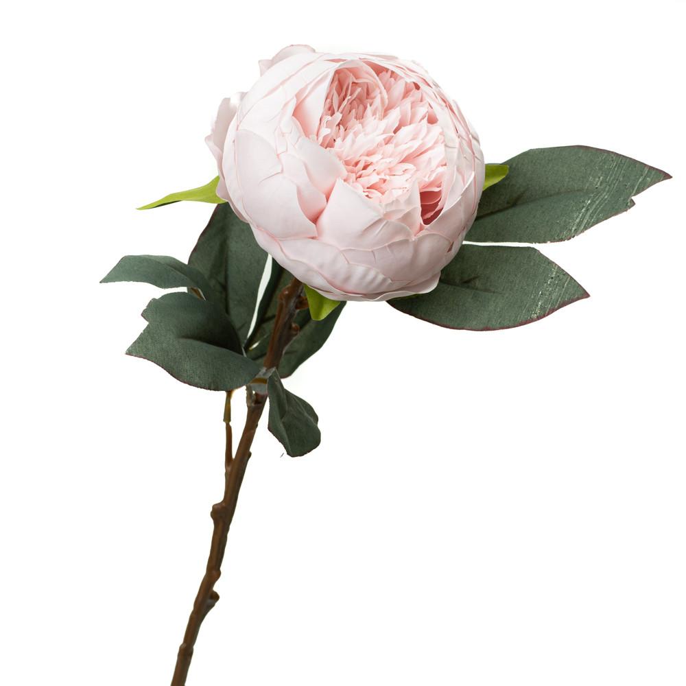 Пион, розовый