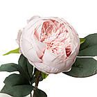 Пион, розовый, фото 2