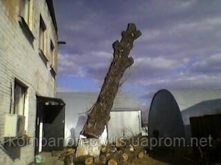 Порезка деревьев 4665942 Спилить дерево Киев. Обрезка деревьев. Вырубка.