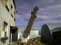 Порезка деревьев 4665942 Спилить дерево Киев. Обрезка деревьев. Вырубка., фото 1