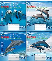 /Тетрадь 18л (клетка) 3106к Дельфины