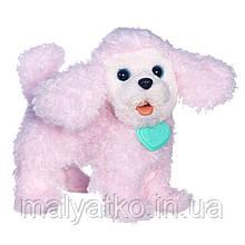 Интерактивная игрушка Hasbro FurReal Friends Щенок пудель PomPom  Walkin Puppies Pretty Poodle Toy Plush