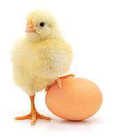 Стимулятор развития для птицы (30% бутират натрия, микрокапсула)
