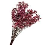 Сухоцветы и стабилизированные растения