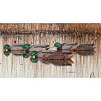 Утиные чучела плавающие Avian-X Floating Mallard Duck Decoys - Back Water, 6 Pack