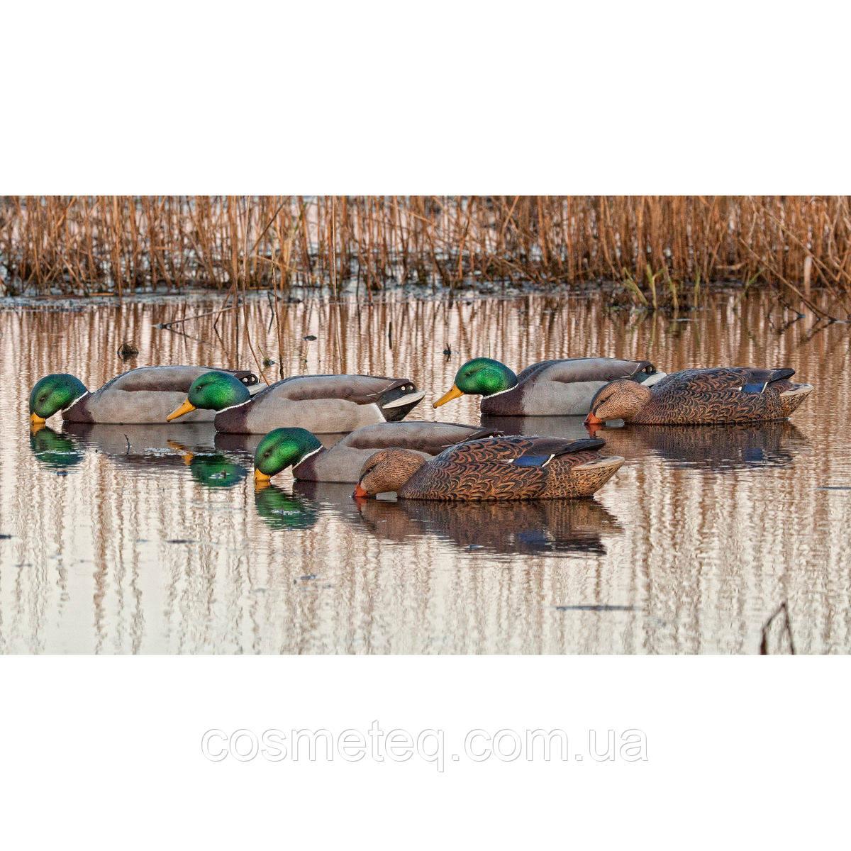 Утиные чучела плавающие Avian-X Floating Mallard Duck Decoys - Back Water, 6 Pack - Товары из США USSHOP в Херсоне