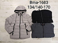 Куртка для хлопчиків Glo-Story, . Артикул: BMA1683 , 134/140-170 рр., фото 1