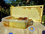 Мед подсолнечниковый урожая 2021 года, фото 9