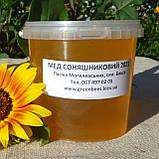Мед подсолнечниковый урожая 2021 года, фото 3