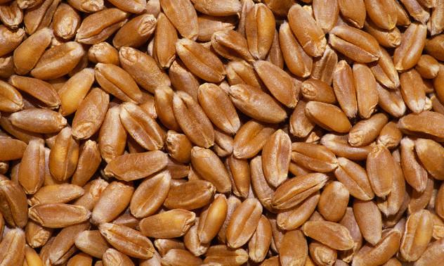 Пшениця 2 клас