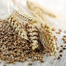 Пшениця клас 3