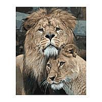 Картина по номерам Лев и львица, 40*50 см, ST