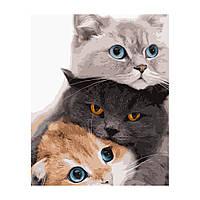 Картина за номерами Кошенята, 40*50 см, ST