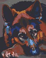 Картина за номерами Німецька вівчарка, 40*50 см, без коробки RB