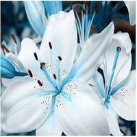 Семена лилия 1 упаковка 10 семян голубая