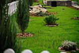 70грн/кг мешок 25кг Газон-Распродажа 2021 семена газонных трав оптом по низким ценам, фото 10