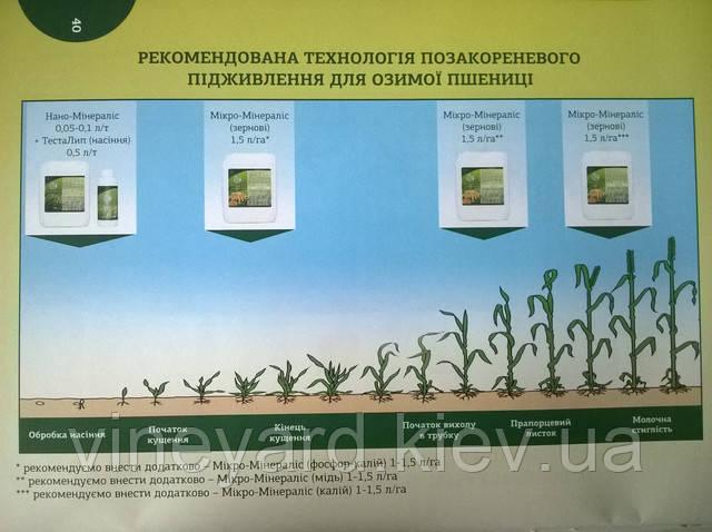 сроки подкормки озимых зерновых микроэлементными удобрениями Минералис 61 грн/га