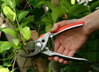 Инструмент для сада