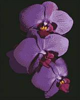 Алмазна мозаїка ArtStory Орхідеї 40*50см в коробці