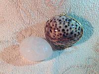 Дезодорант натуральный Кристалл в тихоокеанской тигровой раковине и пакетике, цельный минерал, 70г