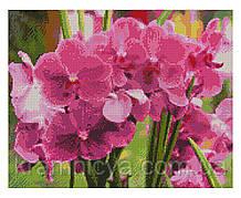 Алмазная мозаика Яркие орхидеи, 40х50 Strateg (FA10634)