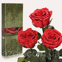 Три долгосвежих троянди Червоний Рубін 7 карат (коротке стебло)