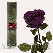Долгосвежая троянда Фіолетовий Аметист 7 карат (коротке стебло)