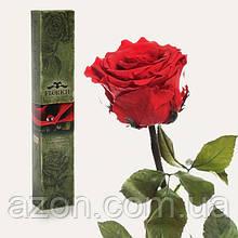 Долгосвежая троянда Червоний Рубін в подарунковій упаковці (не в'януть від 6 місяців до 5 років) на короткому стеблі