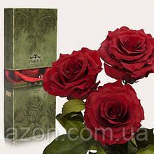 Три долгосвежих троянди Червоний Гранат 7 карат (середній стебло)