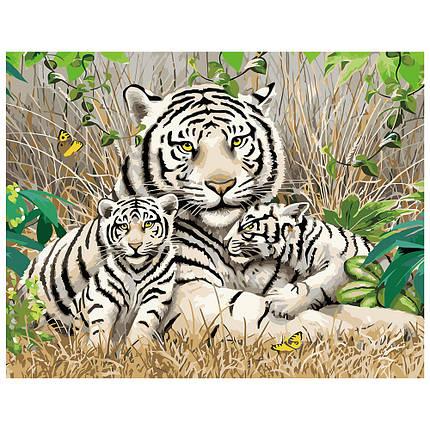 Картина за Номерами Сім'я бенгальських тигрів 40х50см Strateg, фото 2