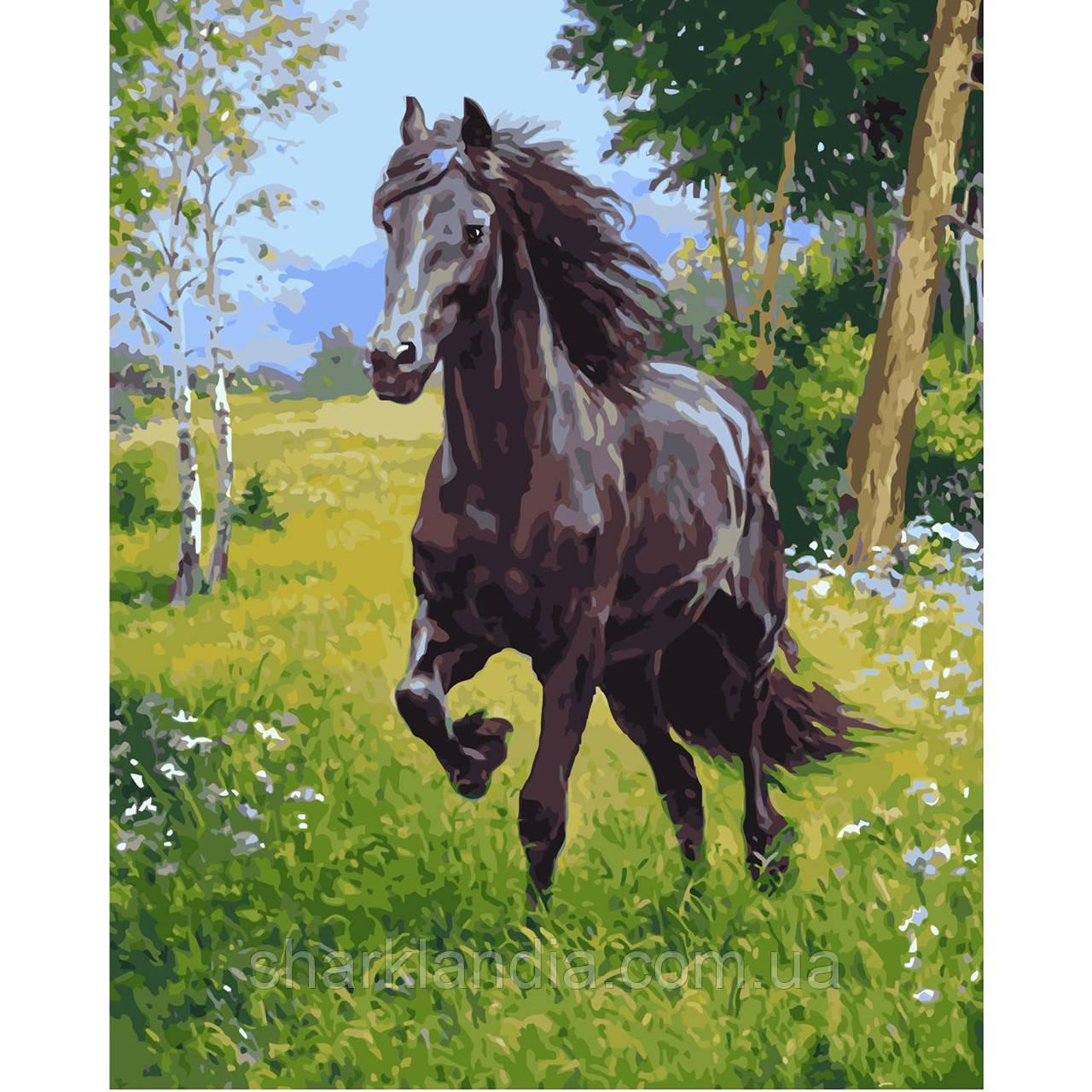 Картина за номерами Арабський кінь 40х50см Strateg